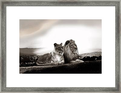 Lion Couple In Sunset Framed Print