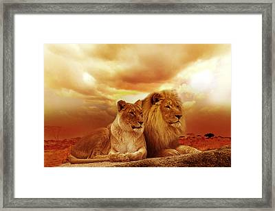 Lion Couple Without Frame Framed Print