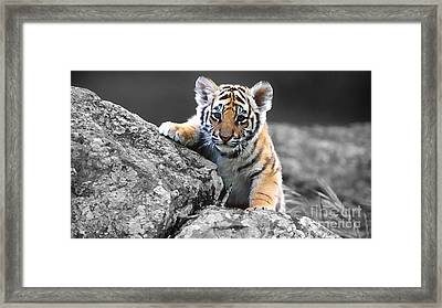 Lion Cub Painting Framed Print by Marvin Blaine