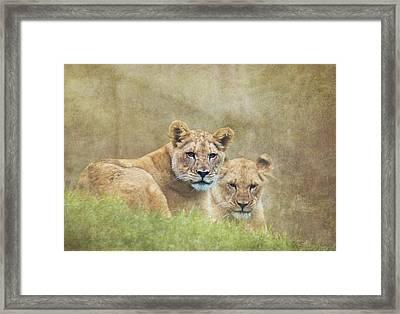 Lion Cubs Framed Print by Angie Vogel