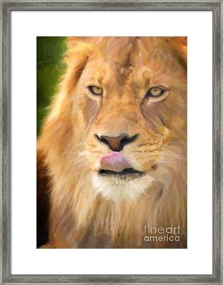 Lion Framed Print by David Millenheft