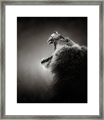 Lion Displaying Dangerous Teeth Framed Print by Johan Swanepoel
