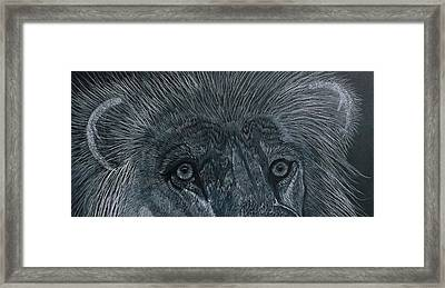 Lion Eyes  African King Detail Framed Print by Gerald Strine