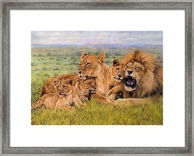 Lion Family Framed Print by David Stribbling