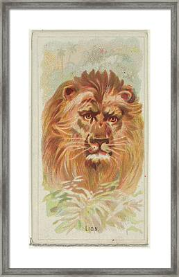 Lion, From The Wild Animals Framed Print