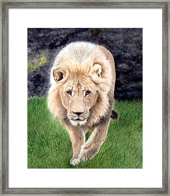 Lion From Woodland Park Zoo Framed Print
