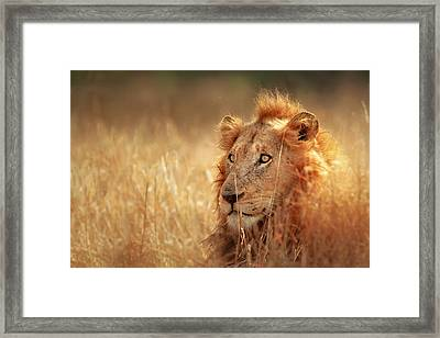 Lion In Grass Framed Print by Johan Swanepoel