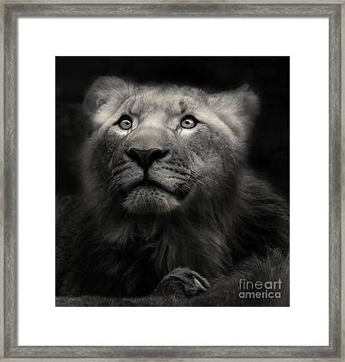 Lion In The Dark Framed Print
