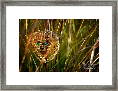 Lion In The Grass Framed Print by Amy Cicconi