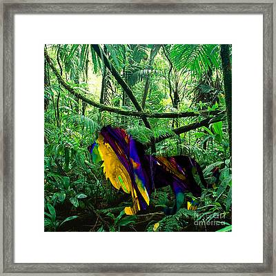 Lion In The Jungle Framed Print
