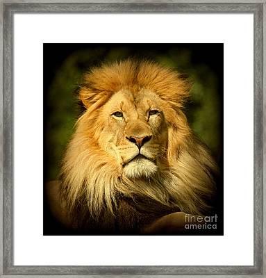 Lion King Framed Print