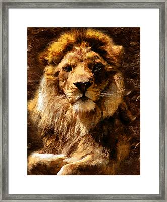 Lion King Of Beasts Framed Print by Georgiana Romanovna
