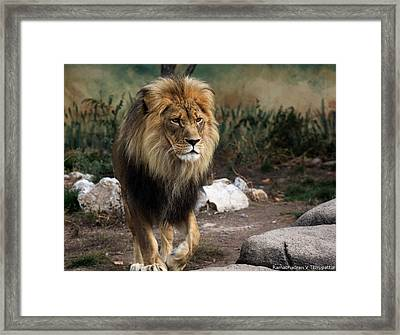 Framed Print featuring the photograph Lion King by Ramabhadran Thirupattur