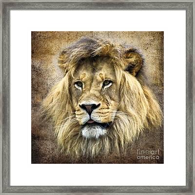 Lion King Framed Print by Steve McKinzie