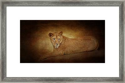 Lion Lady Framed Print by Heike Hultsch