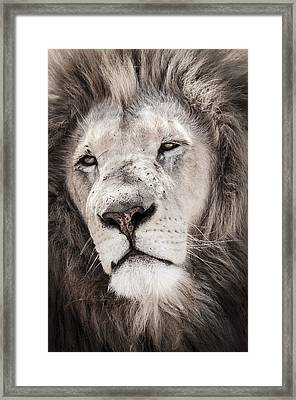 Lion No. 1 Framed Print by Andy-Kim Moeller