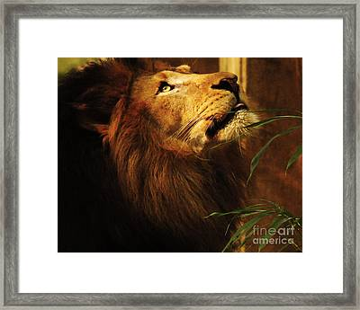 Framed Print featuring the photograph The Lion Of Judah by Olivia Hardwicke