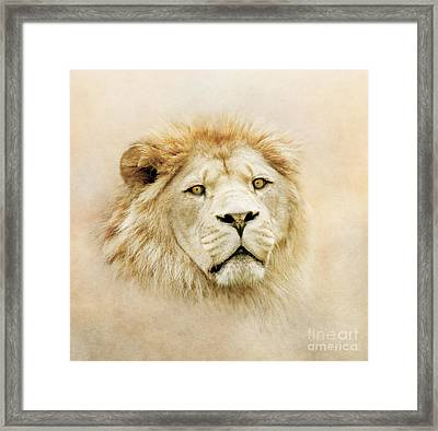 Framed Print featuring the photograph Lion Portrait by Roy  McPeak