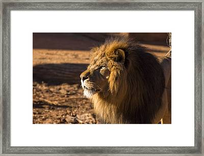 Lion Profile Framed Print by Chris Flees