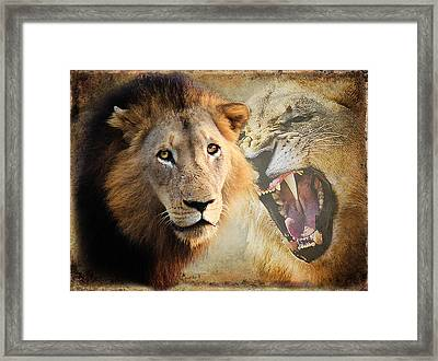 Lion Profile Framed Print by Ronel Broderick