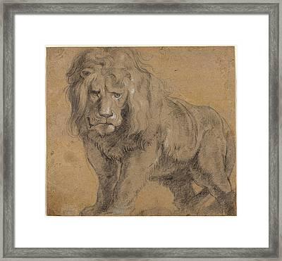 Lion Sketch Framed Print by Paul Ruebens