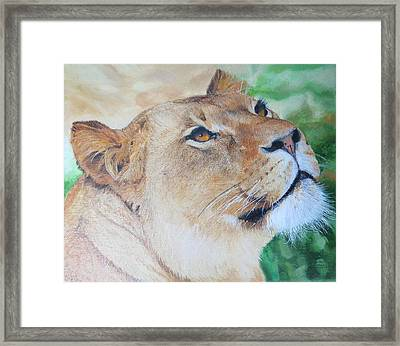Lioness Big Cat Oil Painting Hand Painted 8 X 10 Inches By Pigatopia Framed Print by Shannon Ivins