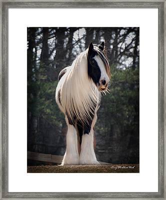 Lioness Dahlia Framed Print