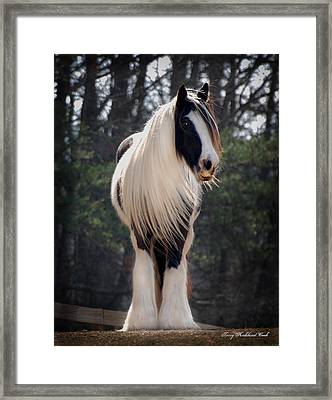 Lioness Dahlia Framed Print by Terry Kirkland Cook