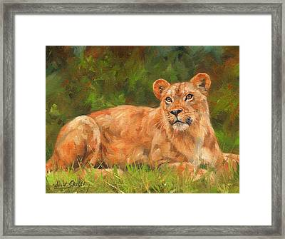 Lioness Framed Print by David Stribbling