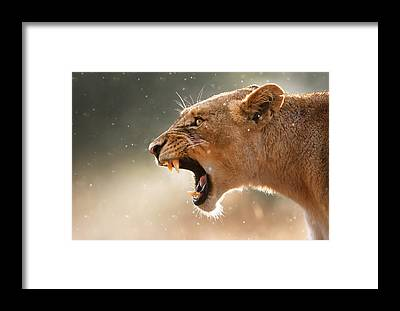 Wild Animals Framed Prints