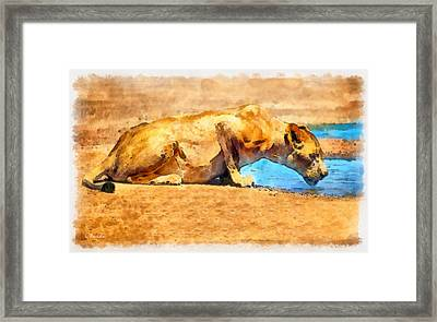 Lioness Drinking Framed Print by George Rossidis