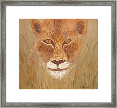 Lioness In Waiting Framed Print