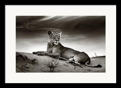 Cats Resting Framed Prints