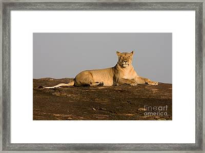 Framed Print featuring the photograph Commanding View by Chris Scroggins