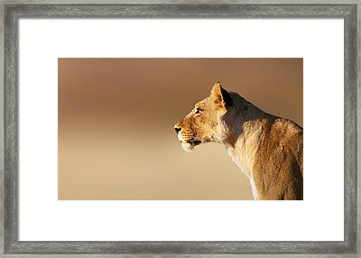 Lioness Portrait Framed Print by Johan Swanepoel