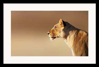 Cat Profile Framed Prints