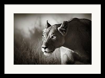 Cat Images Framed Prints
