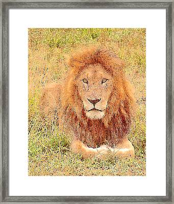 Lion's Eyes Framed Print