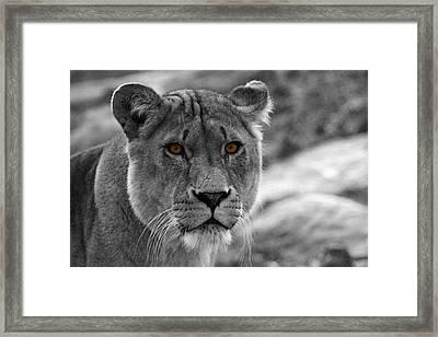Lions Eyes Framed Print