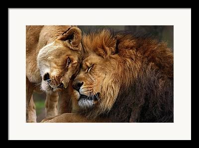Pittsburgh Zoo Framed Prints