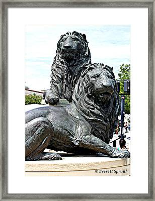 Lions Of Marco Island Framed Print