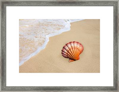 Lion's Paw At Water's Edge Framed Print