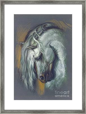 Lipizzan Horse Framed Print by Zorina Baldescu
