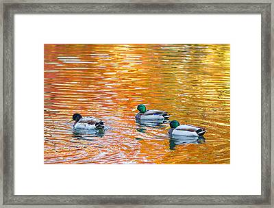 Framed Print featuring the photograph Liquid Autumn by Carl Amoth
