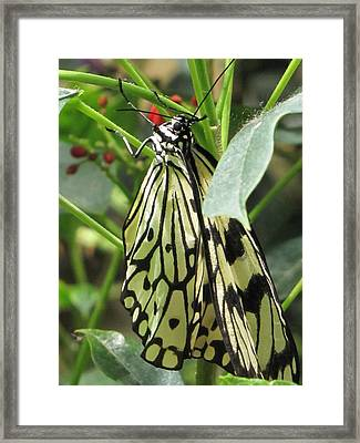 Liquid Gold Framed Print by Jennifer Wheatley Wolf