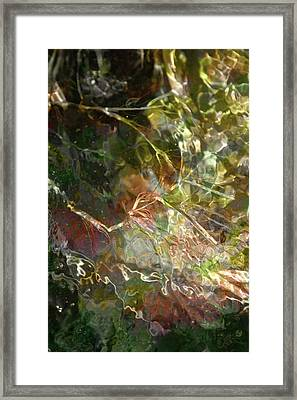Liquid Leaves Framed Print by Rich Collins