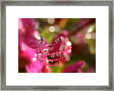 Liquid Light Framed Print by Lisa Knechtel