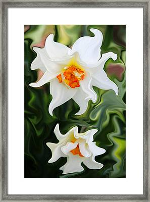 Liquid Narcissus Framed Print by Mary Burr