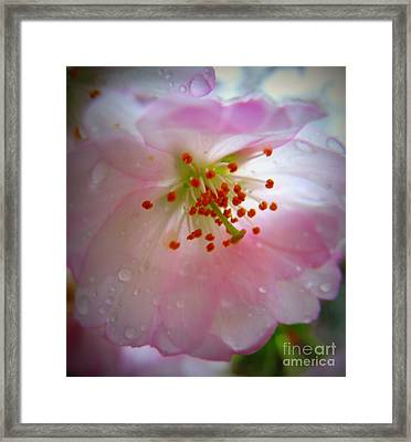 Liquid Sunshine Framed Print by Patti Whitten