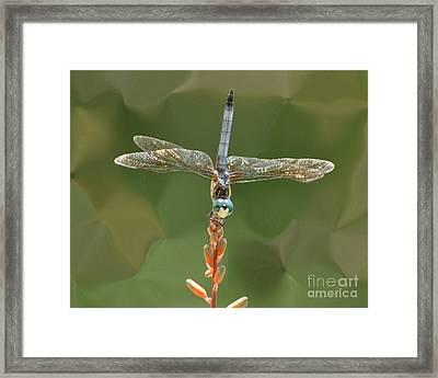 Liquify Dragonfly Framed Print
